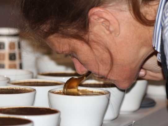 "78 lotes de café pasaron a la XXIII Cata Internacional ""The Best of Panama"""