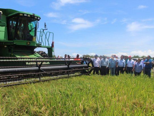 Inicia cosecha de arroz con apoyo estatal
