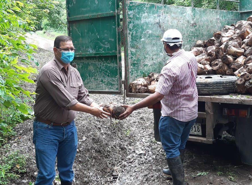 Más de mil tallos de plátano reciben productores herrerano