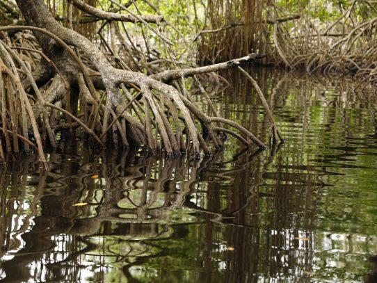 Los manglares la protección natural que debemos preservar