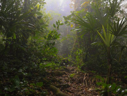 Los bosques tropicales, los últimos guardianes del balance ambiental