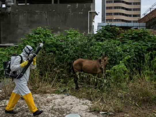 El zika no ha desaparecido: esto es lo que los expertos saben